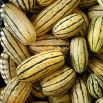 Winter Squash--Delicata